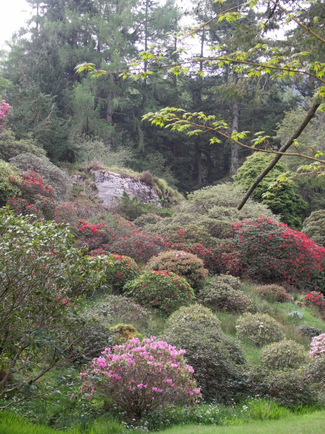 Mounds of colour amidst greenery