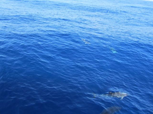 Dolphins, click, click.